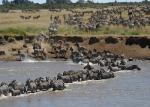 It's the seven wonders of the world's famous game reserve due to the annual wild